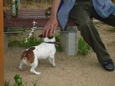 snap_mireiushiwakamairo_20096215312.jpg