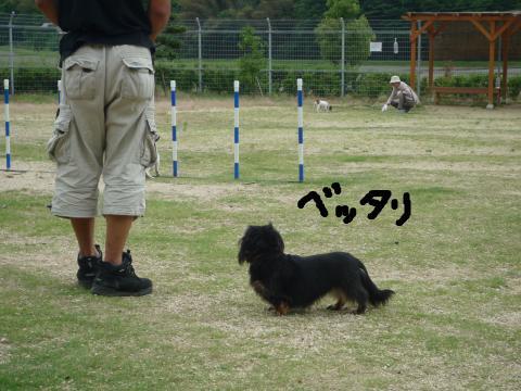 snap_mireiushiwakamairo_200962153937.jpg