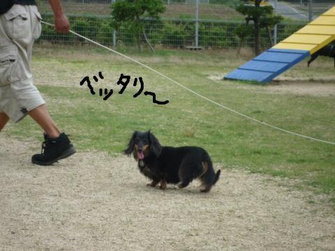 snap_mireiushiwakamairo_200962154440.jpg