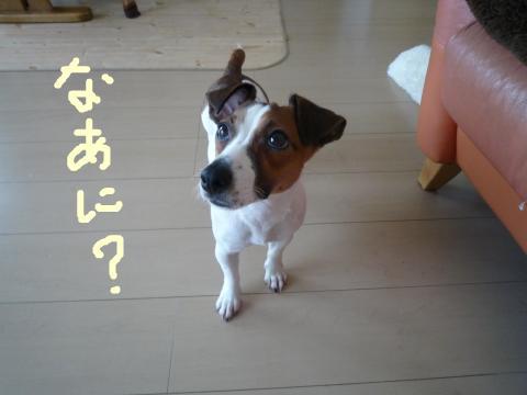 snap_mireiushiwakamairo_200964154130.jpg