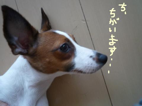 snap_mireiushiwakamairo_200964154933.jpg