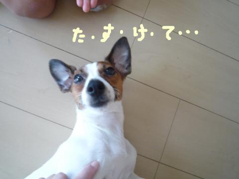 snap_mireiushiwakamairo_20096416948.jpg
