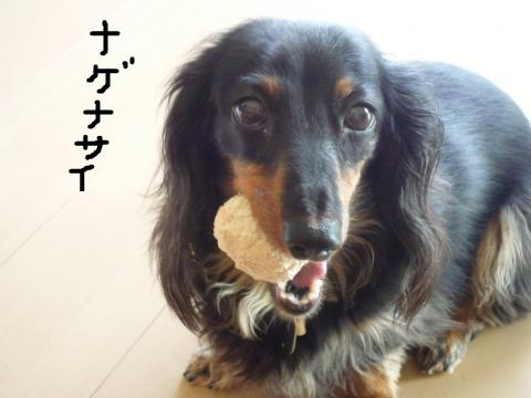 snap_mireiushiwakamairo_200964222453.jpg