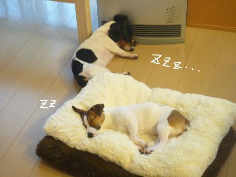 snap_mireiushiwakamairo_200964232027.jpg