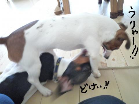 snap_mireiushiwakamairo_200964234728.jpg