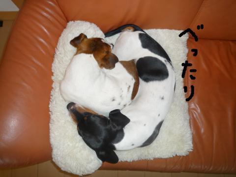 snap_mireiushiwakamairo_20096503027.jpg
