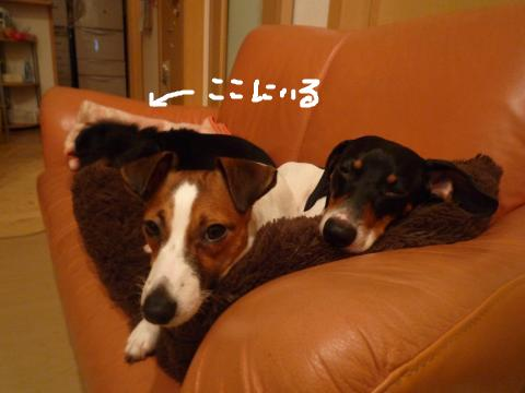 snap_mireiushiwakamairo_20096511439.jpg
