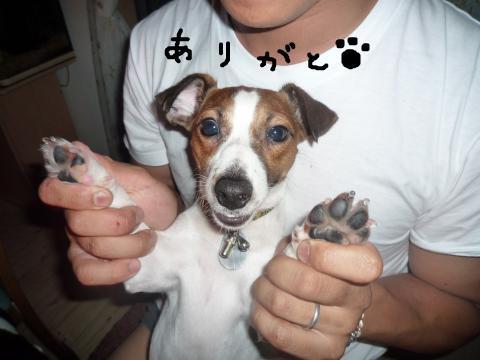 snap_mireiushiwakamairo_200972121225.jpg