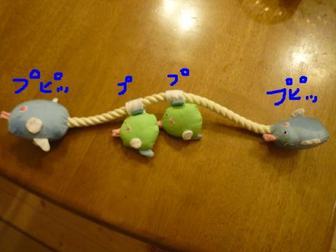 snap_mireiushiwakamairo_200972121939.jpg