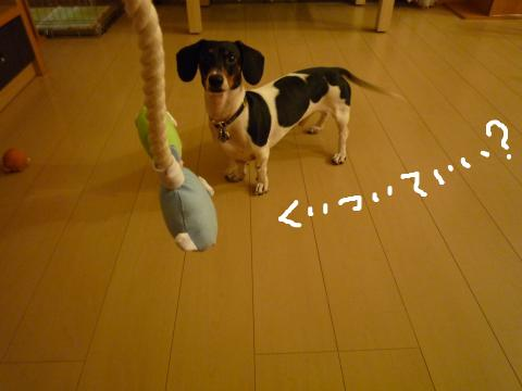 snap_mireiushiwakamairo_20097213329.jpg