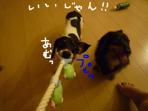 snap_mireiushiwakamairo_20097214504.jpg