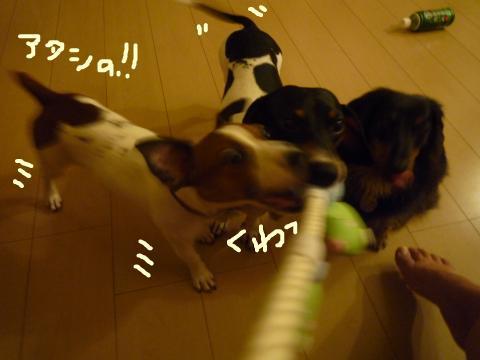 snap_mireiushiwakamairo_20097215155.jpg