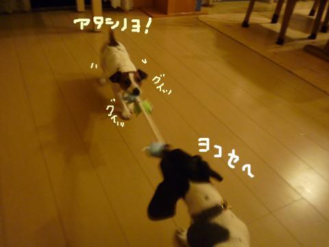 snap_mireiushiwakamairo_200972151727.jpg