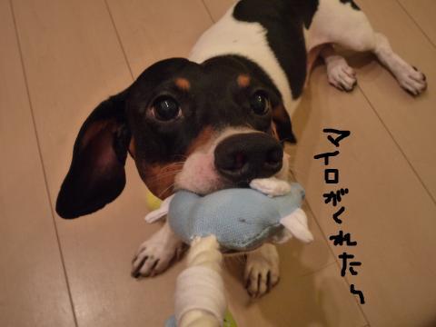 snap_mireiushiwakamairo_200972153654.jpg