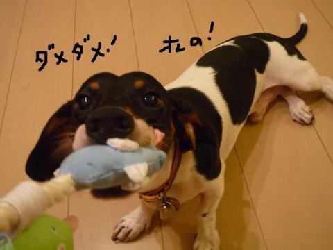 snap_mireiushiwakamairo_200972154153.jpg
