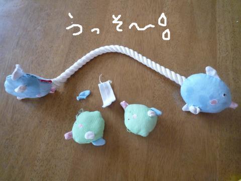 snap_mireiushiwakamairo_200972155245.jpg