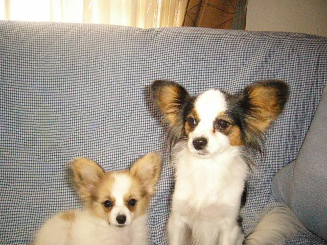 ソファーでマナとアリス