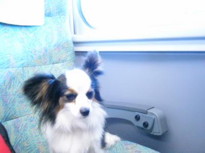新幹線マナ