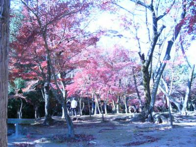 永保寺の紅葉