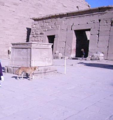 エジプトのワンコ3