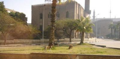 エジプトのワンコ6