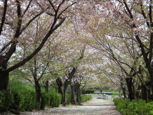 葉桜もきれいやん