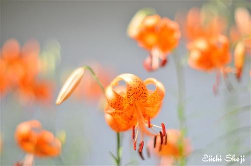 SHO_1431.jpg