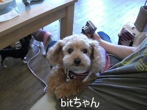 bitちゃん