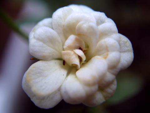 みさき・花