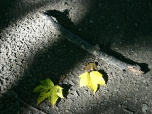 「秋の光」~屈斜路湖畔で見つけた落ち葉