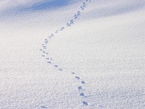 「雪に足あと」 当別町の雪景色