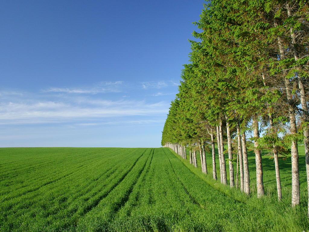 樹のある風景 - s-araki.com