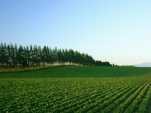 「防風林2」~小清水町の畑作風景