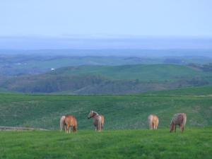 「大草原を戯れる」~果てしない多和平の牧場風景