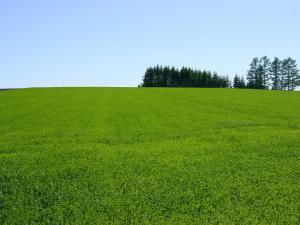 「グリーングラス」~見渡す限りの草原・大空町の風景