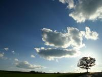 「光の樹」~美瑛町・セブンスターの木