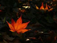 「一枚の葉」~美瑛町の秋