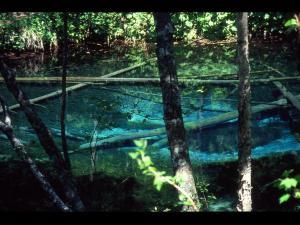 """「神の湖水3」~""""生のチカラ""""を感じる不思議な湖・神の子池"""