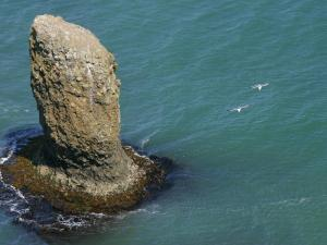 「青い海を飛ぶ」~浜中町・霧多布岬のカモメ