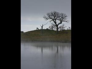 「湖岸に遊ぶ」~知床五湖の鹿