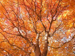 「オレンジ色に包まれて」~札幌・滝野すずらん公園の紅葉