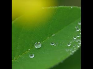 「しずく」~新緑に落ちた雨・別海町