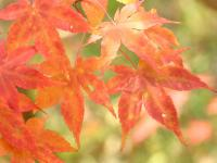 「朱」~ニセコ温泉街の秋の彩り