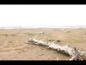 「木の墓場」~野付半島・トドワラの風景