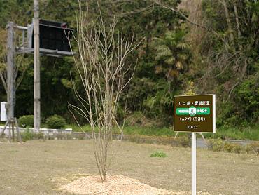 記念植樹-2008