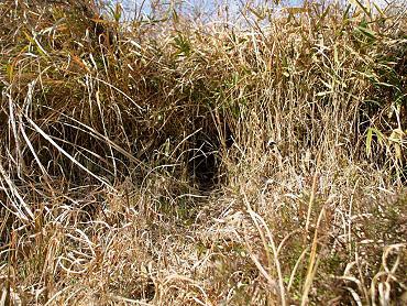 ドリーネ耕作地の調査-3