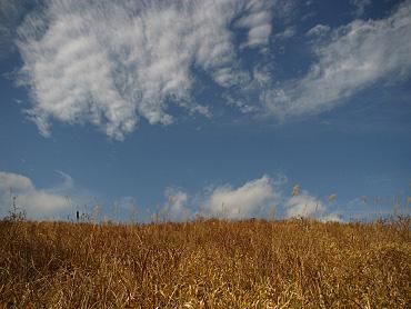 ドリーネ耕作地の調査-2