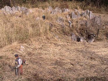 ドリーネ耕作地の草刈り-1