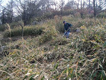 ドリーネ耕作地の草刈り-2
