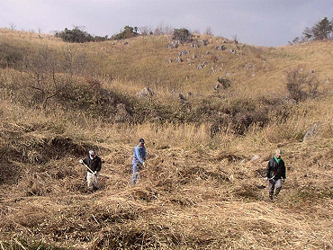 ドリーネ耕作地の草刈り-3